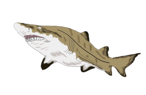 Sand Tiger by FlyingFox-Bat