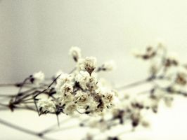 Baby's Breath by JayLPhotography