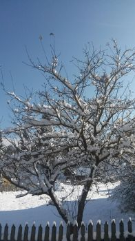 Winter tree by Cassi4you