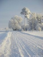 Winter beauty in Lithuania by Ivetaaa