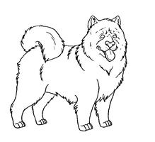 FREE Chowchow lineart PAINT by Kultapossu