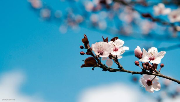 Spring 4 by Bonjous