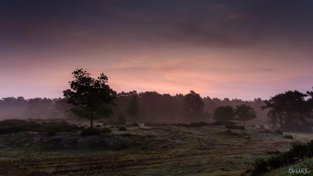 Mellow Morning by tvurk