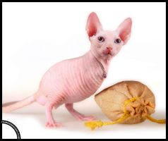 Hairless Harold by HumanDescent