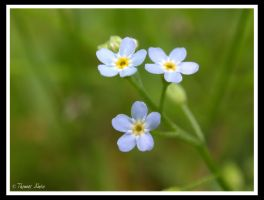 Blue Weeds by talwin