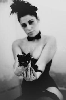 Black Cats. by TinaApple