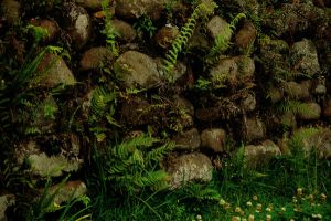Mossy Wall2 by Armathor-Stock