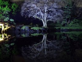 JAPANESE GARDEN  REFLECTION 50 by hirolu