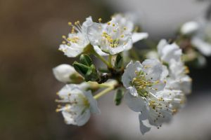 flower5 by KnB-Stock
