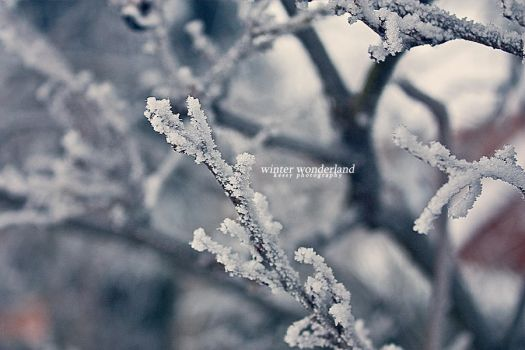 winter wonderland I by backatone