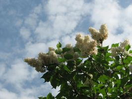 Stock: Flower bush/Sky by Think-Outside-Of-Box