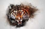 Tiger by jiuce