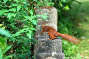 squirrel on the run by Philophobos