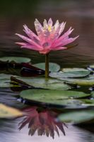 Lotus Simple by DGPhotographyjax