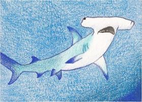 Day 12: Great Hammerhead ACEO by whitetippedwaves