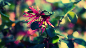 Lunar Deluge by atLevel1Alt