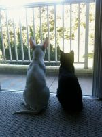 pinky and the brain by september28