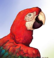 Red n' Green Parrot by That-Dodo