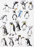 17 Species of Penguin by zara-leventhal