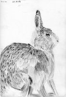 Brown Hare by Lutra-Gem