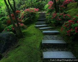 Steps to Paradise by La-Vita-a-Bella