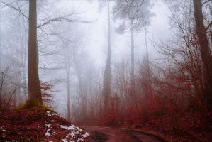 Bloodred Forest X by Aenea-Jones