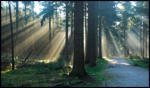 Enjoying the November sun by jchanders