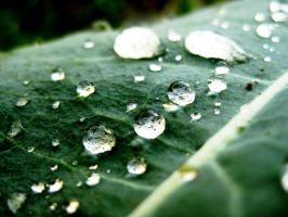rain drops on leaf by v-ii-k-ii