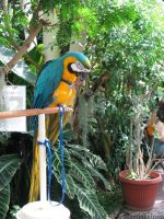 Macaw and a Nut by WhitePhoenix7