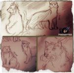 .:The Hobbit Cats:. by pokeketter