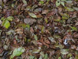 Wet Leafs by Toderico