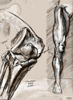 knee and leg study by NCMALLORY