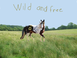 Wild and free by WildHorses21