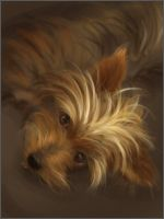 Speedpaint Pup by jezebel
