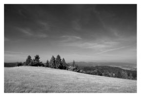 BW nature by Avalong