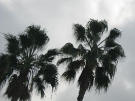 Palm Trees by Pupachu