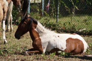 Chincoteague Pony by LusciousxLollies