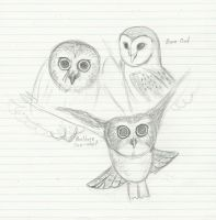 Owl Sketches by Josabella