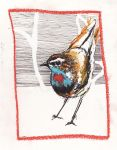 Bluethroat by JudoLynx