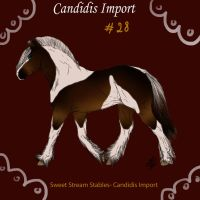 Candidis Import #28- ON HOLD by SweetStreamStables
