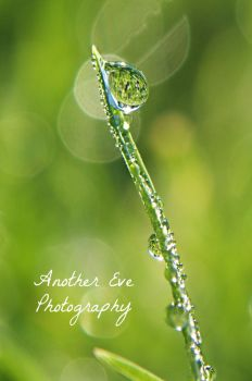 Glistening Dew by AnotherEve