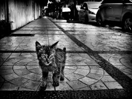 Braga's Kitty by djati
