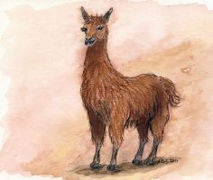 A Llama for my Watchers by Xrxlxs
