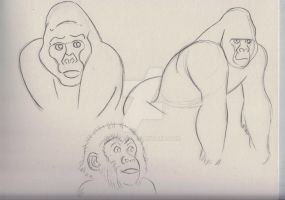 Gorilla 2 001 by keirle