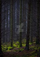 Lost in the Woods by DL-Photography