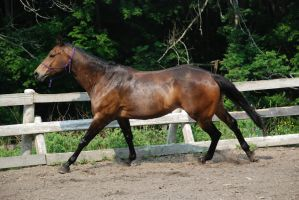 QH 8 by Spotstock