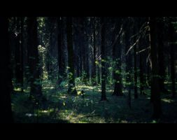 spring forest by Sk1ver