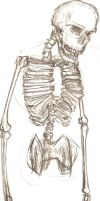 skeleton with no legs by Psychicbard