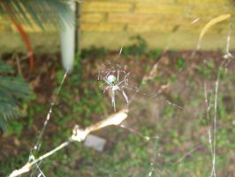 Green Spider by Fully-Stocked