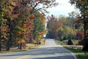 Autumn Comes to Murphy Road by Rjet33